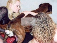 Hardcore animal sex